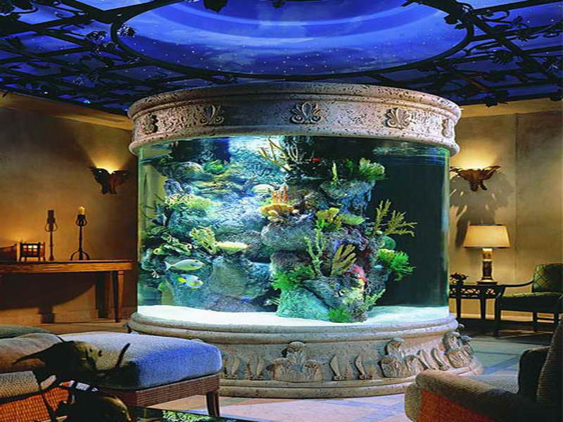 Fish Tank Design Ideas